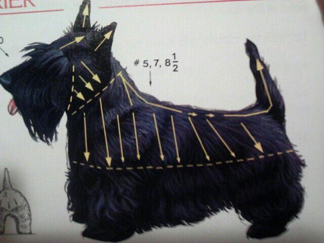 Scottish Terrier Grooming Lines
