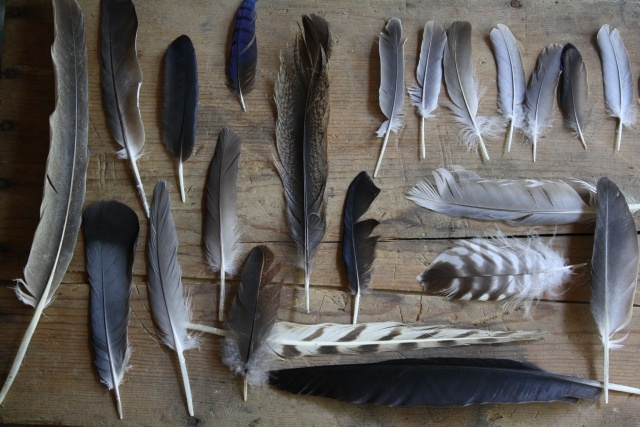 Another idea for Abby's feather collection. On a plank of wood.