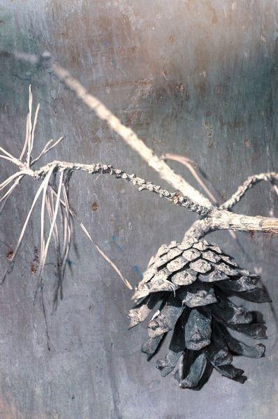 Spruce cone, WoodWork - Photo Gallery Slawek Brodzicki at slawekbrodzicki.com