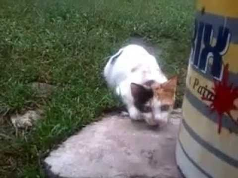 Enjoy here the funny cats videos. Top funny cats video