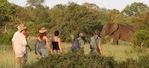 Walking Safaris - Rhino Walking Safaris.  A unique combination of Big Five game drives and multi-day walking safaris in the Kruger National Park. Exclusive access to over 12 000 hectares of pristine wilderness. Choice of traditional game drives or true walking safaris. Sleep-outs available.