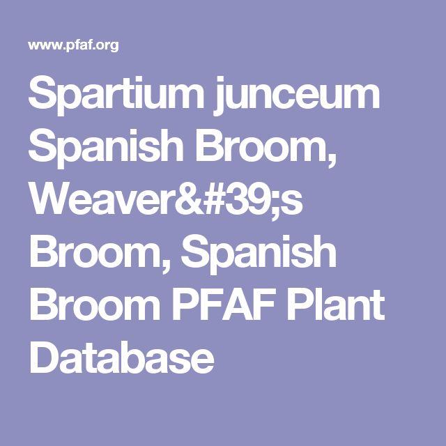 Spartium junceum Spanish Broom, Weaver's Broom, Spanish Broom PFAF Plant Database