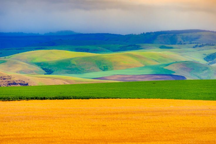 The Palouse Hills - This view of the rolling Palouse hills was taken from the access road to Steptoe Butte in Steptoe Butte State Park near Colfax, Washington.