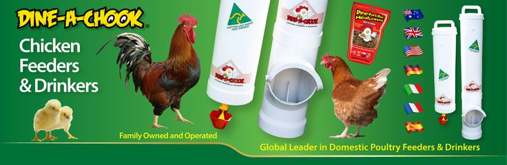 #chickens feeders #hens #eggs #feeders #homesteading #farmers #drinkers #Townsville #shop #Mealworms #chickens  #PoultryFarming