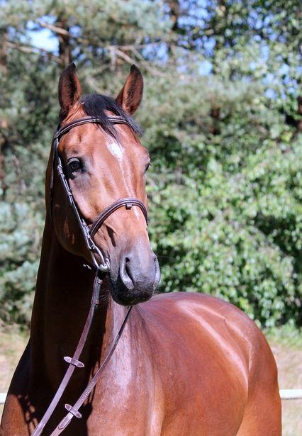 Gestüt Lewitz   Verkaufspferde   Springpferde