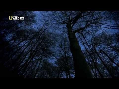 Lesné kráľovstvo / Kingdom of the Forest [CZ dabing] - YouTube