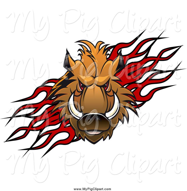 Royalty Free Company Logo Design Stock Pig Designs
