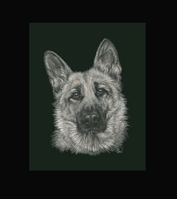 German Shepherd -  This is the actual size of the scratch art. This size is intended as example of a memorial for an urn. Smaller work, like this, can easily be done for a pendant or jewellery. I can work from a photo. A web site dedicated to this is planned. In the mean time I can be contacted at sue@suewalters.com #germanshepherd