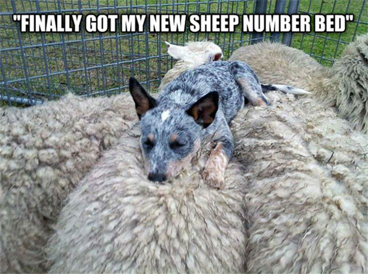 Finally got my new sheep number bed