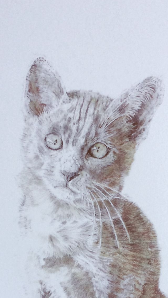 Kitten drawing coloured pencil