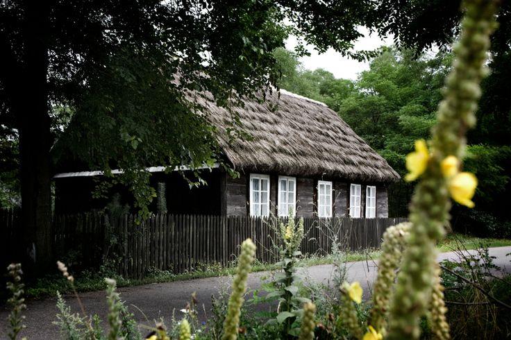 Drewniana chata, kryta strzechą z I ćwierćwiecza XX wieku w Marcjanowie. Gmina Kawęczyn.