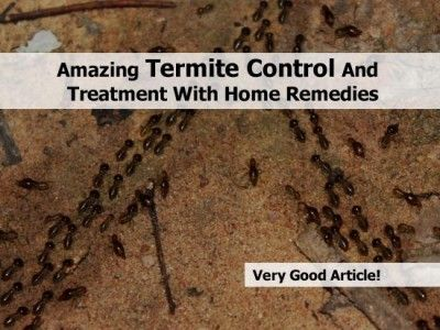 Pictures of Home Remedy For Termite Control