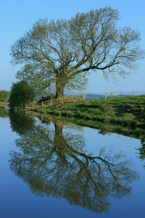 Picture taken while on an early morning walk along the tow path of the Leeds Liverpool Canal. Near Skipton A picture of: Skipton, North Yorkshire