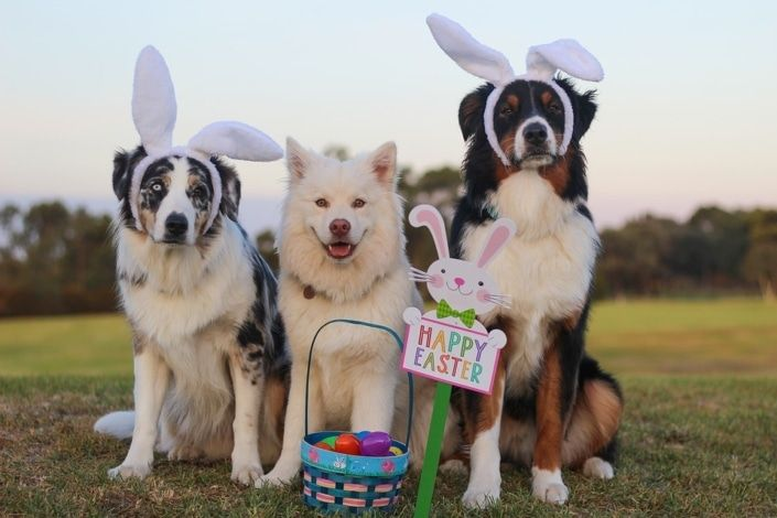 Every Single Easter Egg Hunt Along The Wasatch Front Easter Dog