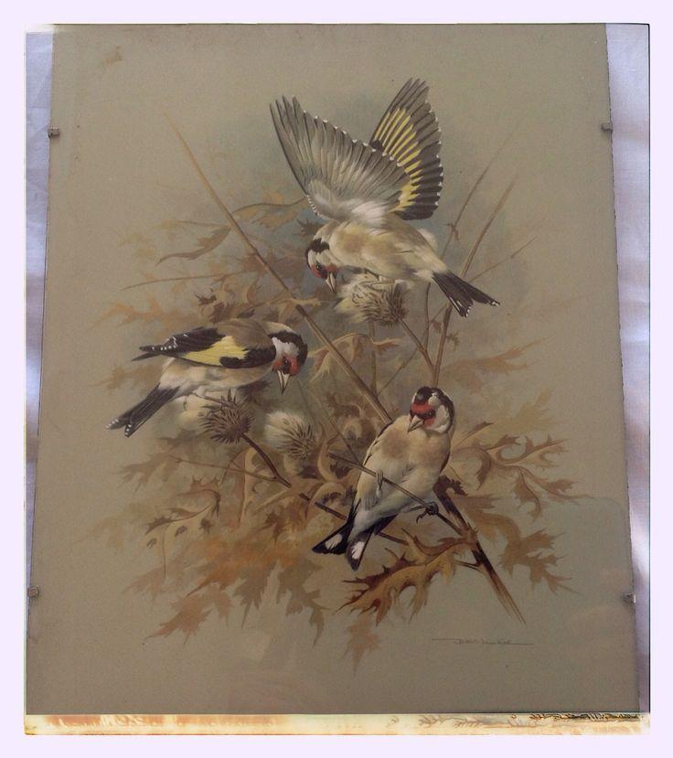 Vintage trio of bird prints for sale.