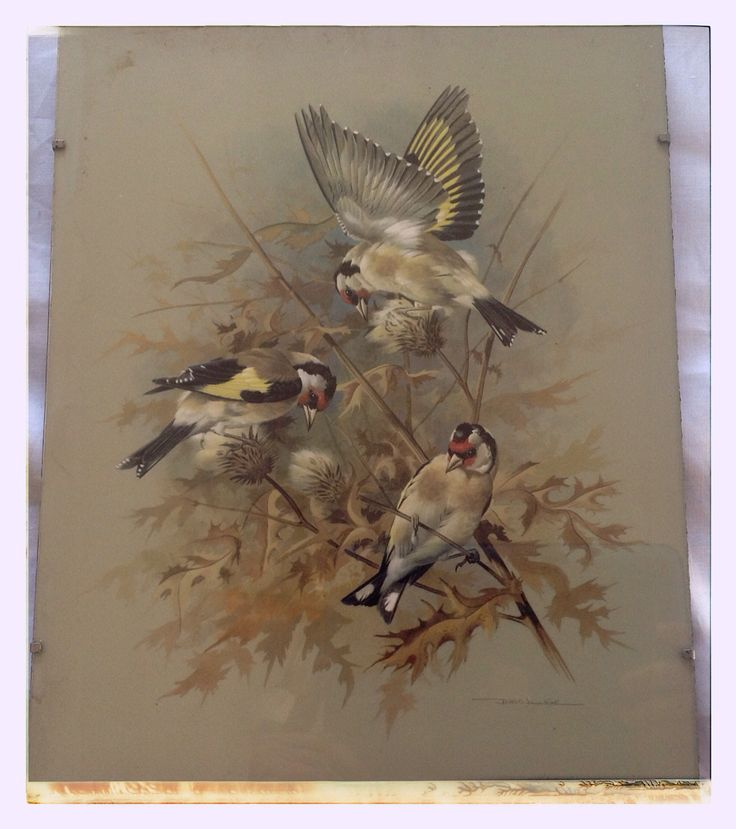Vintage trio of bird prints for sale.