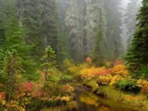 Boldog szép őszi napokat kívánok mindenkinek Az erdők hangjai ! - YouTube