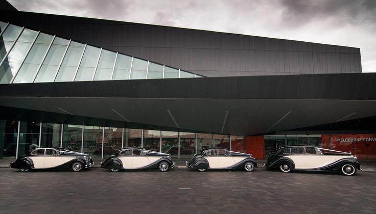 Our 1951 Rolls Royce Silver Wraith with 3 matching Jaguar Mk5 Sedans. #weddingcars #wedding #jaguar #rollsroyce #weddingday #weddingcarsmelbourne #classicweddingcars