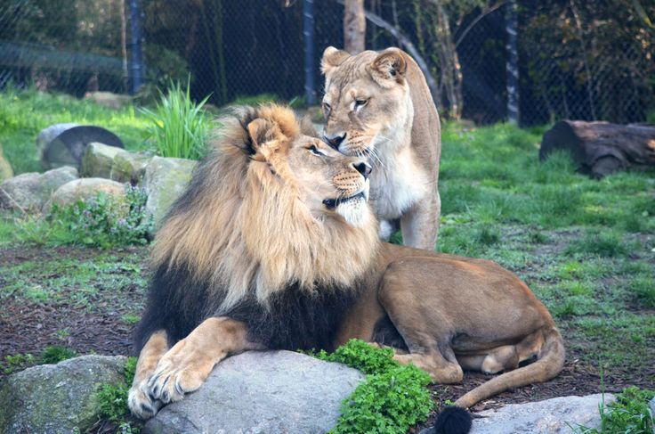 Tamarr and Mandisa now on exhibit at your Akron Zoo