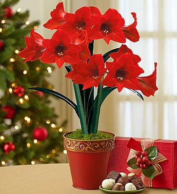 41 best Christmas Flowers and Holiday Decor images on Pinterest ...