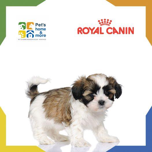 #PetsFact Durante el crecimiento, las defensas naturales de los cachorros no están completamente desarrolladas. El alimento Royal Canin para etapas mini ayuda a promover las defensas naturales de los cachorros. En Pet's home & more puedes comprar Royal Canin en línea o llamando al 01 800 001 PETS