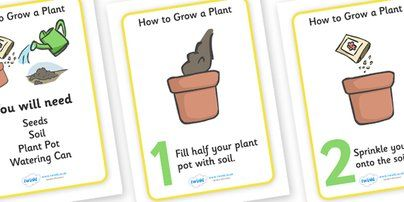Twinkl Resources >> How to Grow a Plant Display Posters >> Classroom printables for Pre-School, Kindergarten, Primary School and beyond! Plant, Growth, Topic, Foundation stage, Flower, knowledge and understanding of the world, investigation,