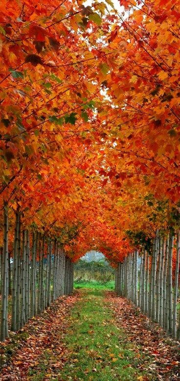 Autumn's cathedral in Whatcom County, Washington • photo: Joel deWaard on Flickr