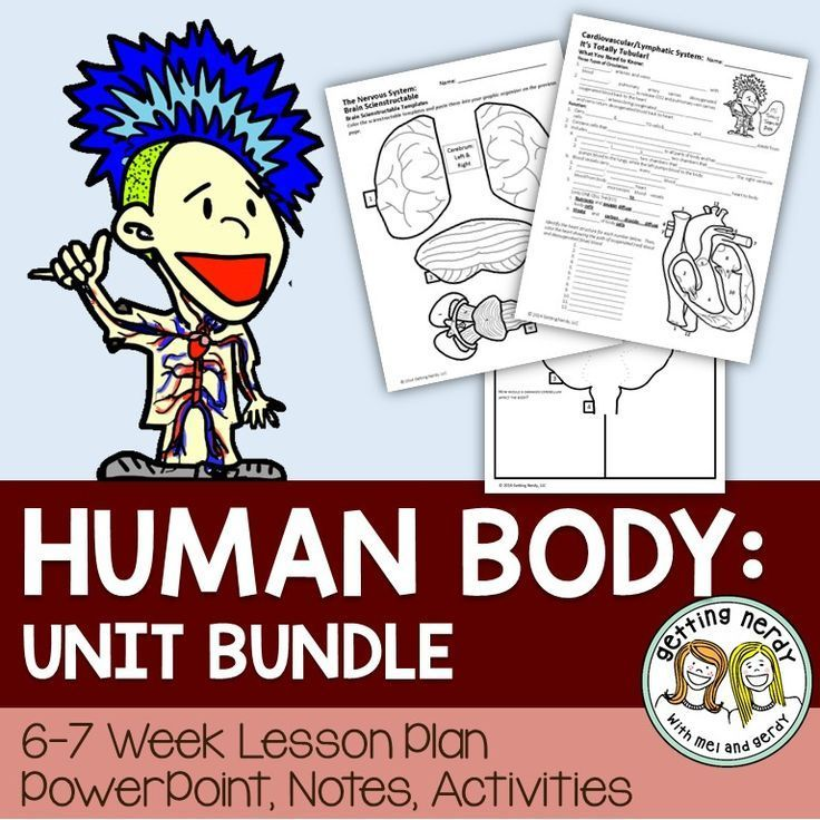 Human Body curriculum - entire unit includes PowerPoint and differentiated notes, activities, projects, labs, and more!