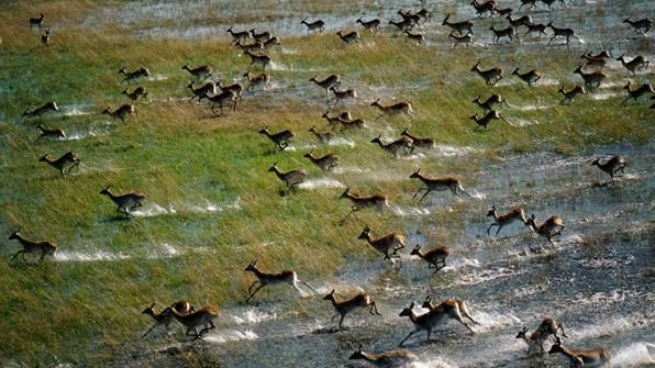 Delta de Okavango - África
