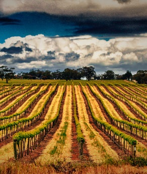 Valley of Barossa, Australia