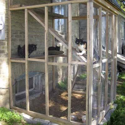 Reader John Looser lives on a busy highway—making it downright scary for him to let his cats outside. So he decided to build an outdoor cage so they can go out whenever they want. The cage is built right in front of a busted-out basement window, so his feline friends can come and go whenever they please.