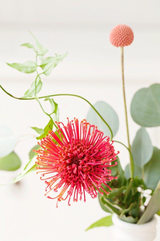 poppy | leaf