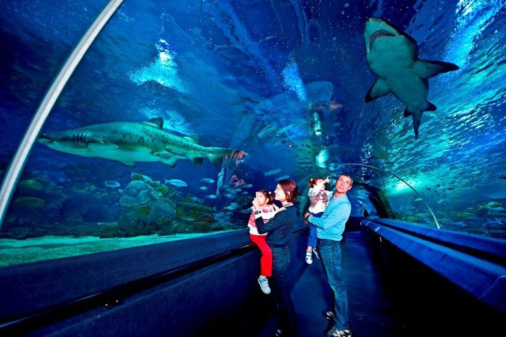 ocean walk @ Turkuazoo Aquarium