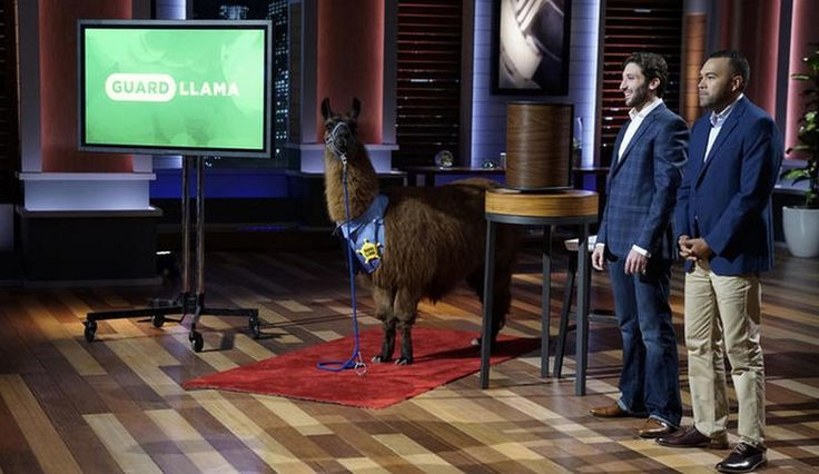 Guard Llama: All About The Emergency Response App From 'Shark Tank' Including Special Discounts