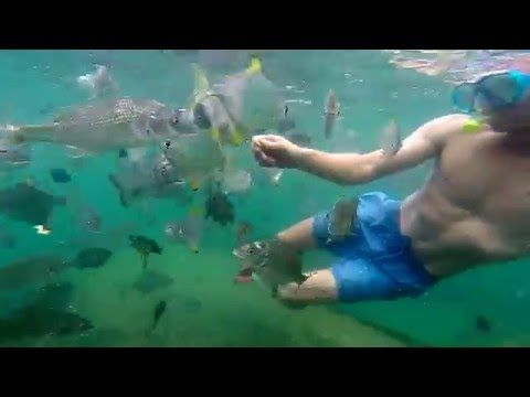 Moreton Island Snorkeling |Things To Do | Moretons Island Adventures