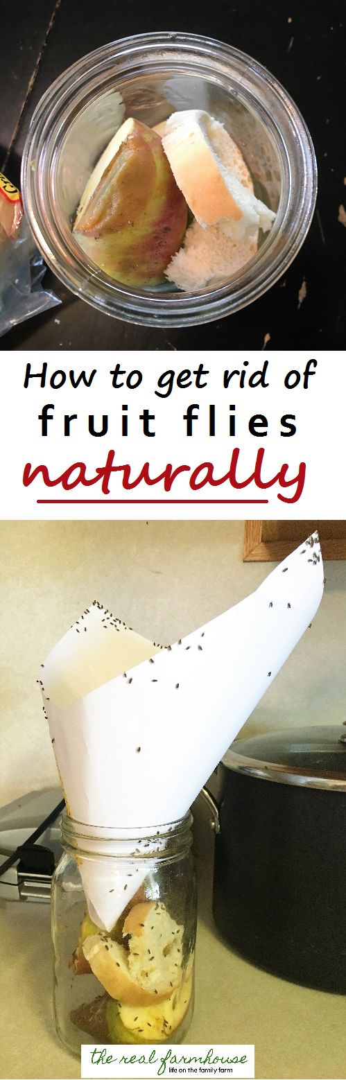 How To Get Rid Of Fruit Flies Naturally  The Best Way. Results In 5