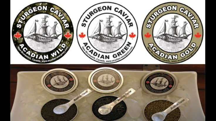 Help us Produce the Best Caviar in the World! project video thumbnail