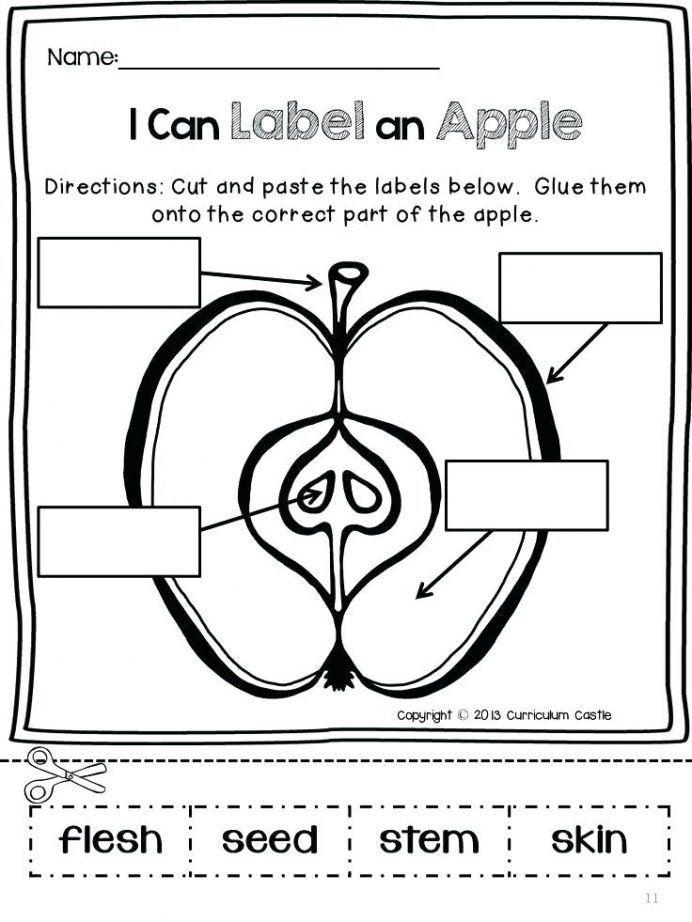 Apple Worksheets Kindergarten 20 Apple Worksheets Preschool Preschool Worksheet Apple worksheets first grade