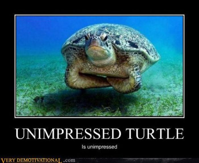 : Grumpy Turtles, Disappoint Turtles, The Faces, Funny Stuff, Funny Animal, Grumpy Cat, Funnystuff, Sea Turtles, Angry Turtles