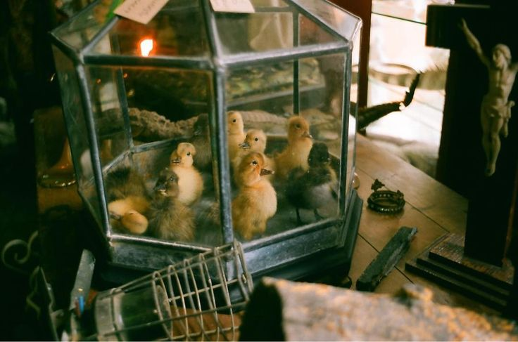 ...and the taxidermist ducklings     #analog #filmisnotdead #shootfilm #film#35mmphotography #filmphotography #filmcamera #filmphoto #filmstagram #filmforever #filmcommunity #35mmers #35mmfilm #lovefilm #analogphotography #analogvibes #analogfilm #olympus  #hastings #taxidermy #ducks