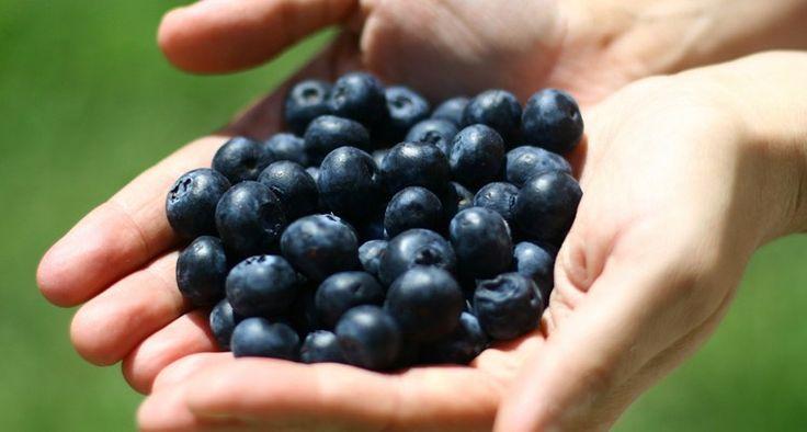 El arándano, la super fruta que previene problemas urinarios