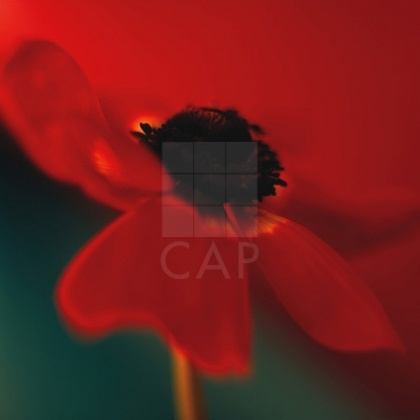 "Piece: ""Red on Turquoise"".  Artist:  Jane-Ann Butler.  Size:  36"" x 36"".   Presentation:  canvas."