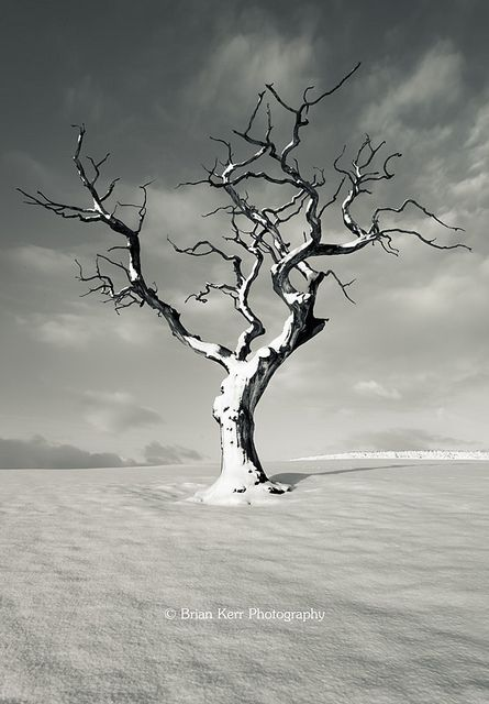 ~~January 2013 ~ mono, lone tree in winter, Cumbria, England by .Brian Kerr Photography~~