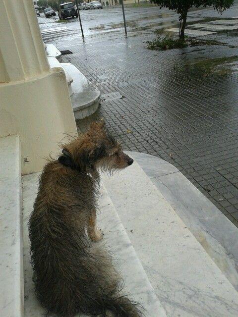 tif sotto la pioggia