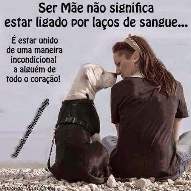 EXATAMENTE ❤ #cachorro #caopanheiro #petmeupet #maedegato #maedecachorro #maedepet #filhode4patas #gato