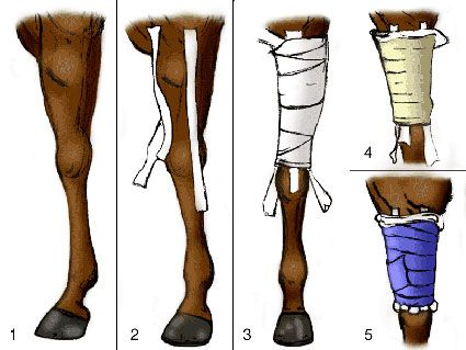 Wrapping a forearm in a horse.