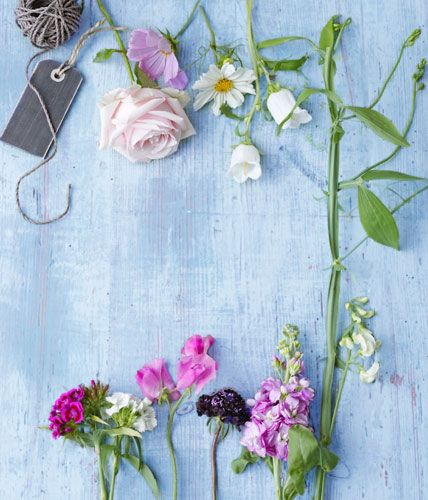 Rose, Kosmee, Glockenblume, Bartnelke, Wicke, Skabiose und Levkoje (links nach rechts). / Foto: Julia Hoersch via Living at home