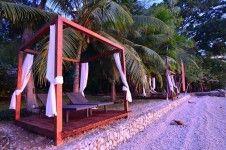 beachfront view in Vanuatu Trees and Fishes