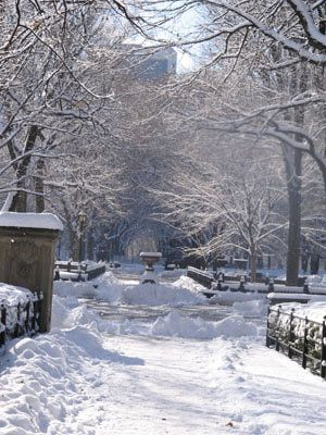 Snow on Central Park: Snowy Pathways