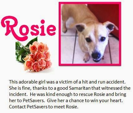 How to Help Shelter Dogs for Free Adopt Rosie for your forever #dog! #adoptable dogs